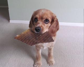 Calling All Dog-Whisperers