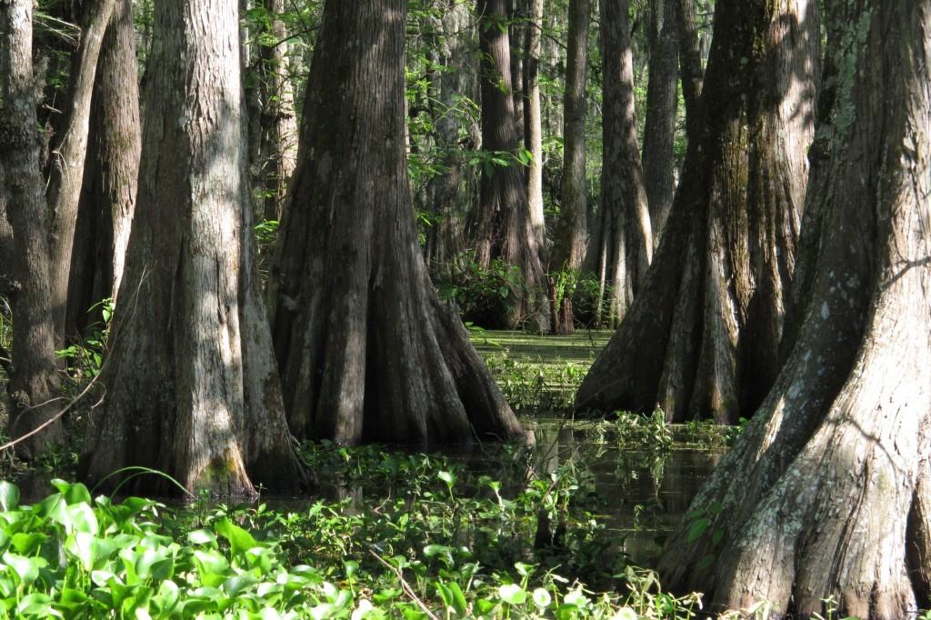 A Visit to Louisiana's Cajun Country
