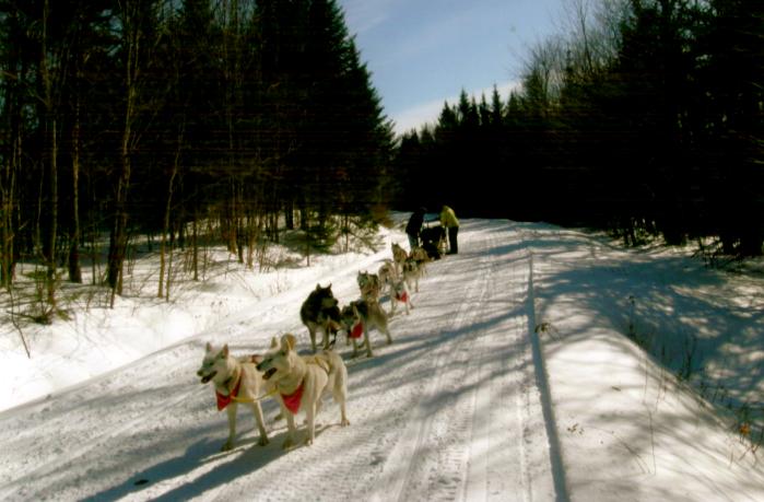 Siberian Husky Warriors: Ready to Run
