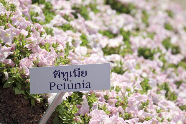 Label Those Plants