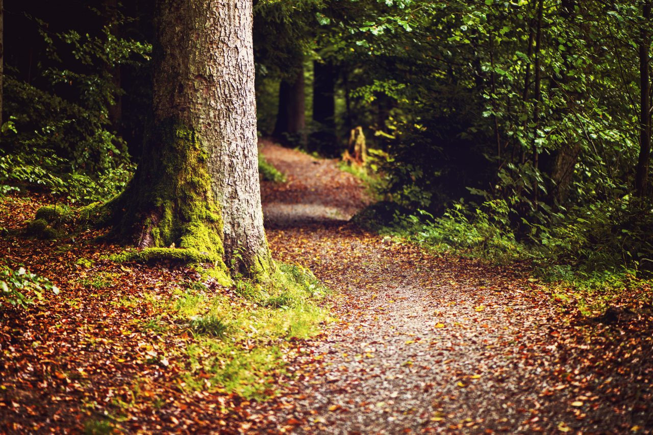 Where the Path Ends and the Forest Begins