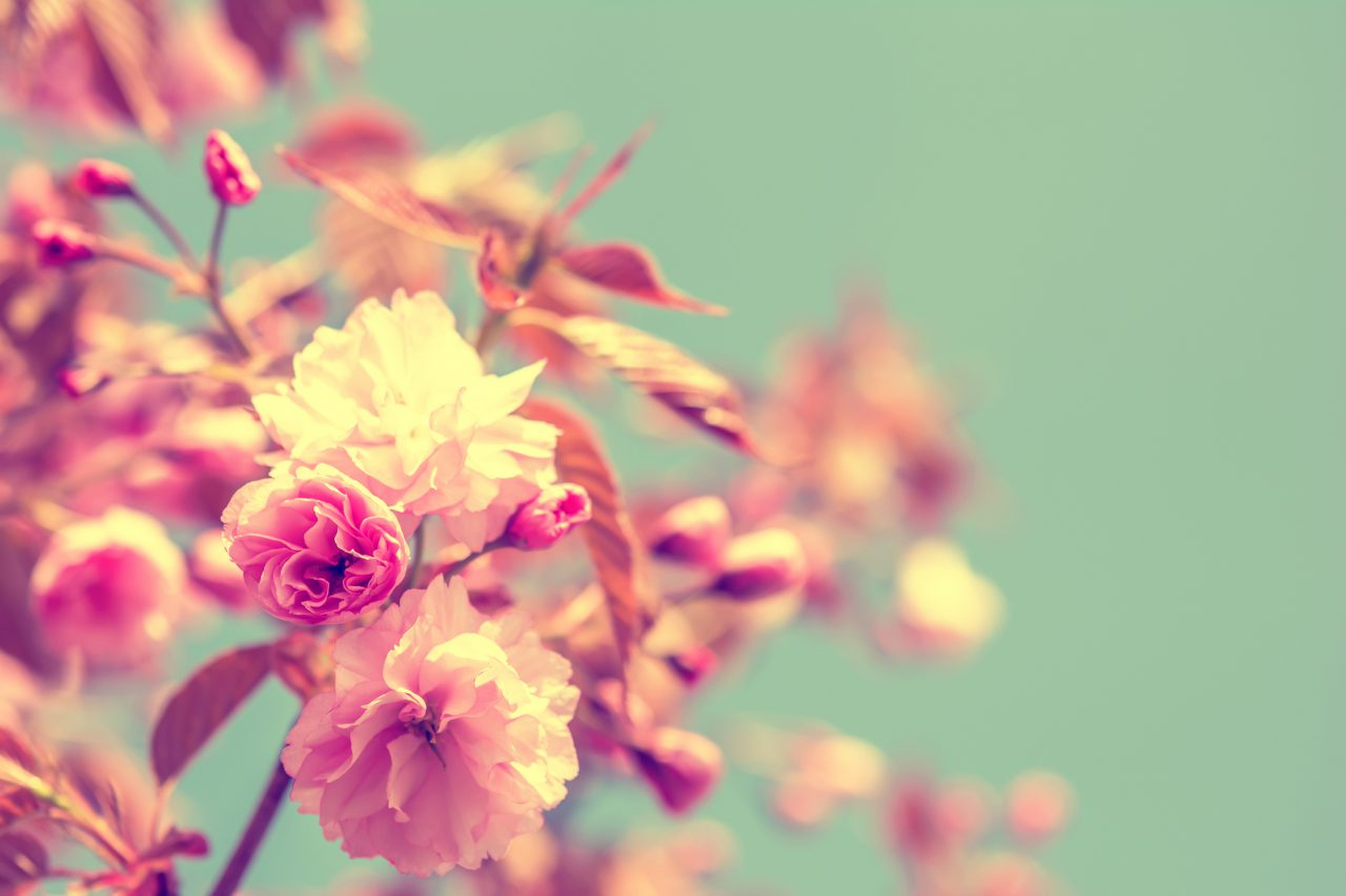 Spring: That Wonderful, Treacherous Season