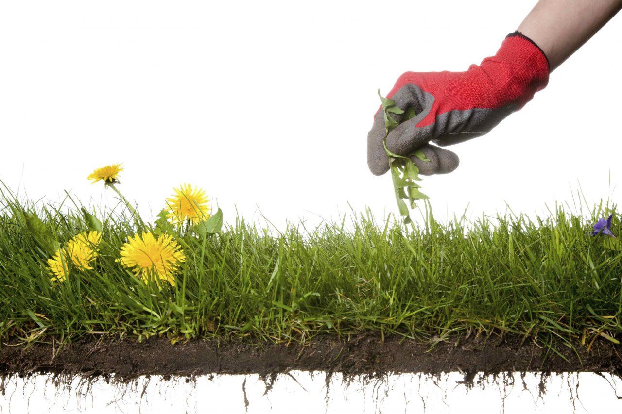 The Art of Fine Weeding