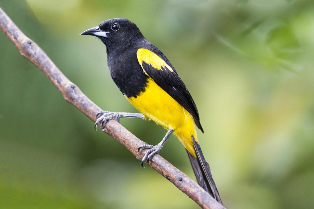 I Meet the Birders