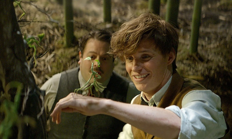 'Fantastic Beasts and Where to Find Them': No Head, No Heart
