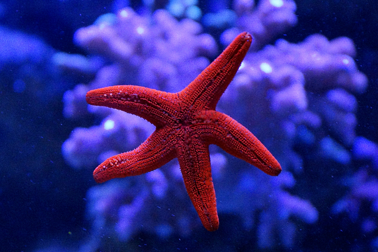 The Starfish Approach