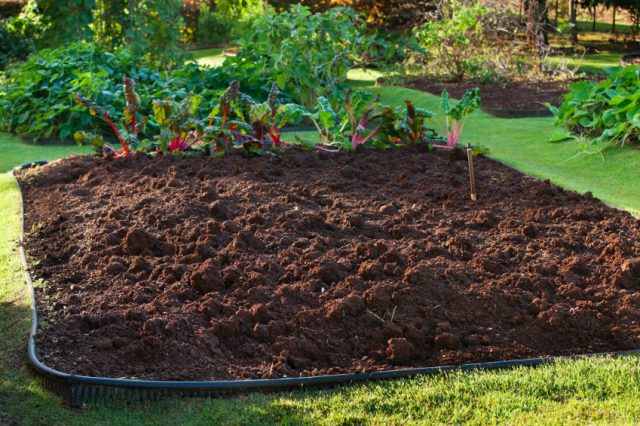 A Successful Garden