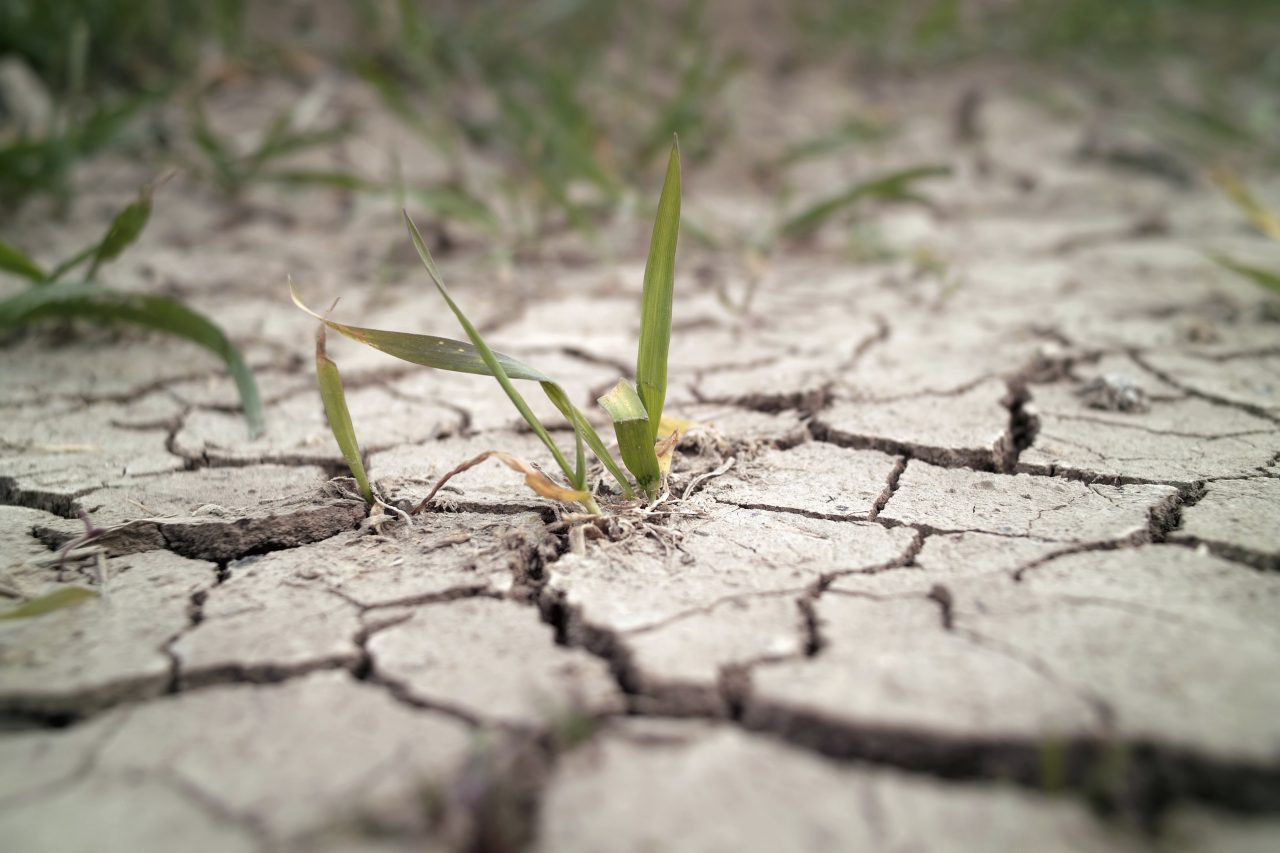'The Grapes of Wrath' Part 2: California Drought