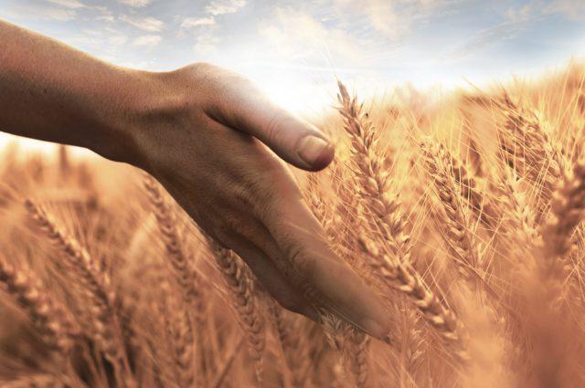 Harvesting Life