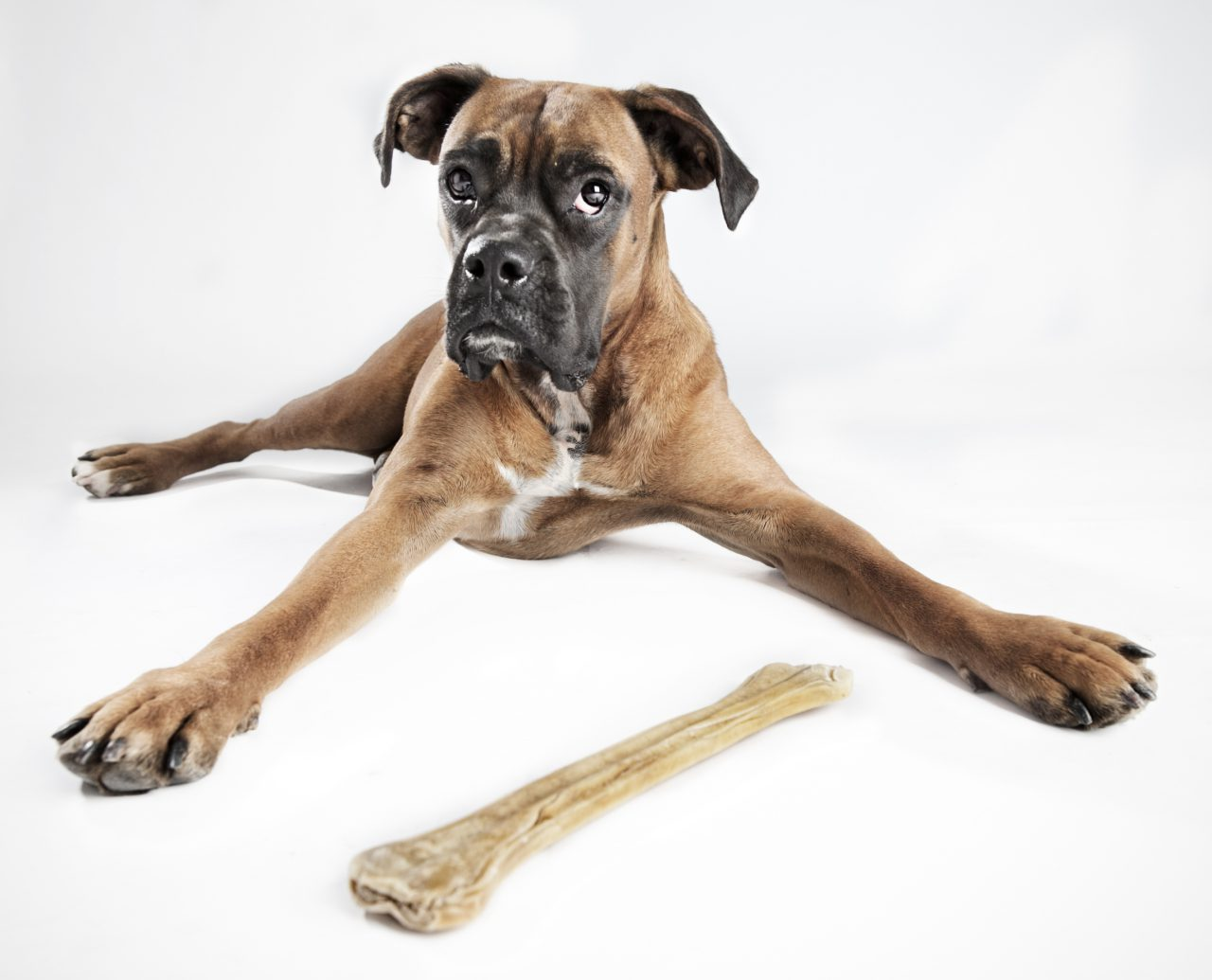 Find Another Dog to Toss That Bone To