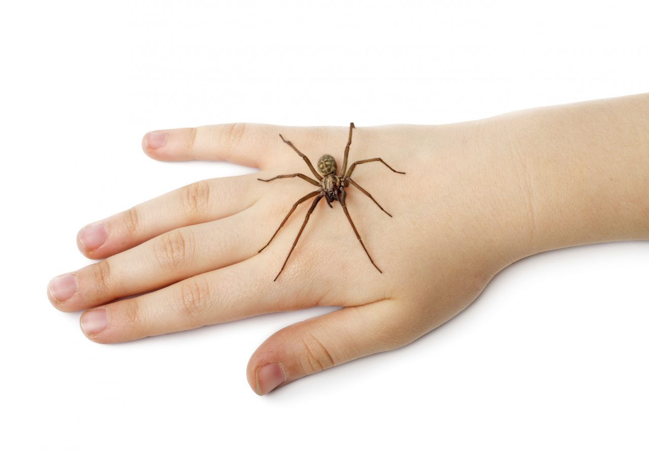 The Scoop on Spiders