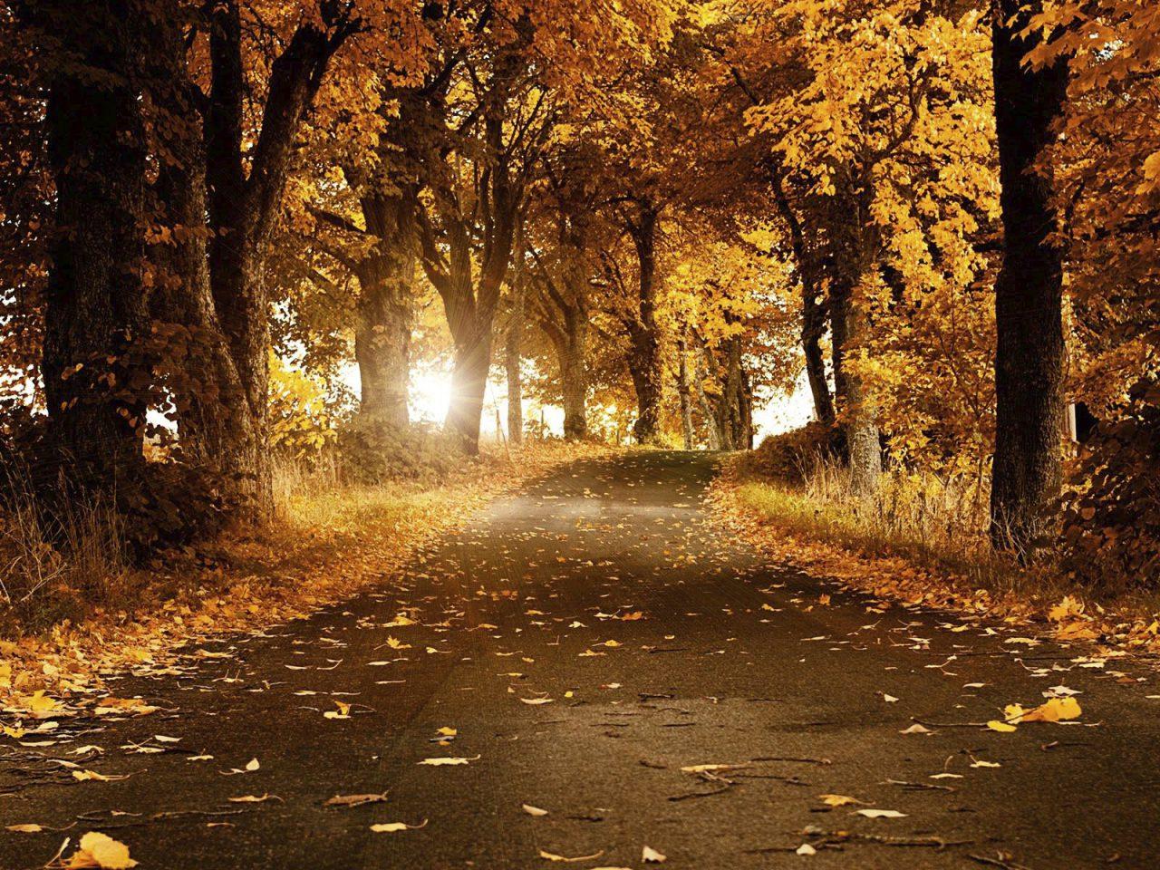 Autumnal Meditations