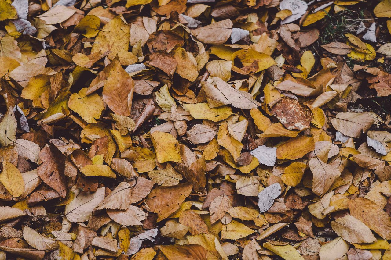 Leaves Upon the Ground