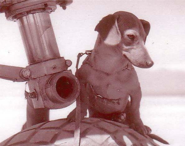 Aeropets of the 91st Photo Squadron