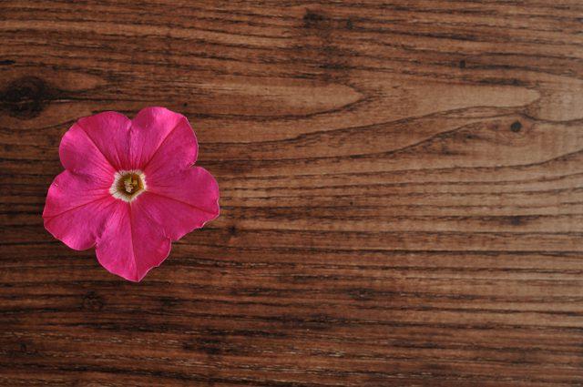 The Strength of Petunia
