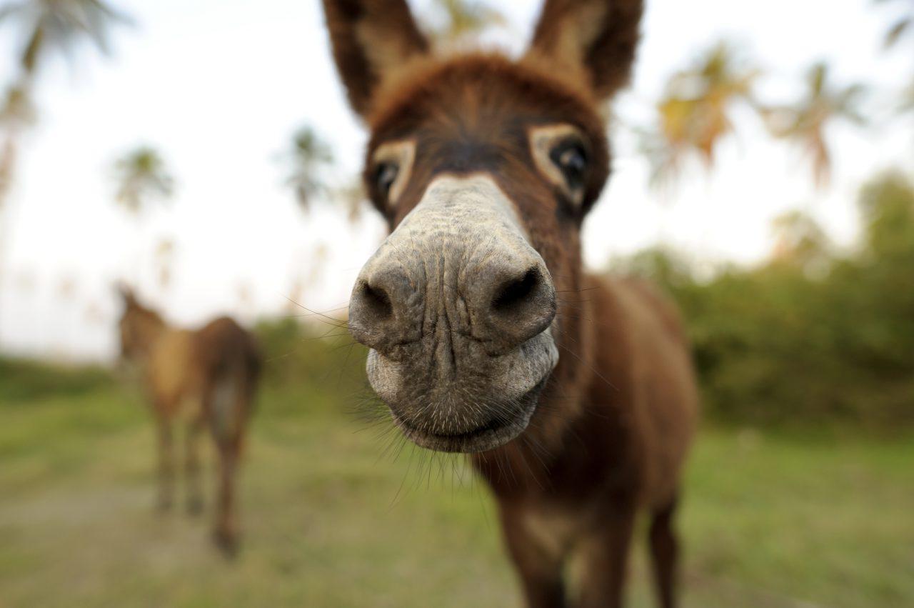 Donkeys and Democrats