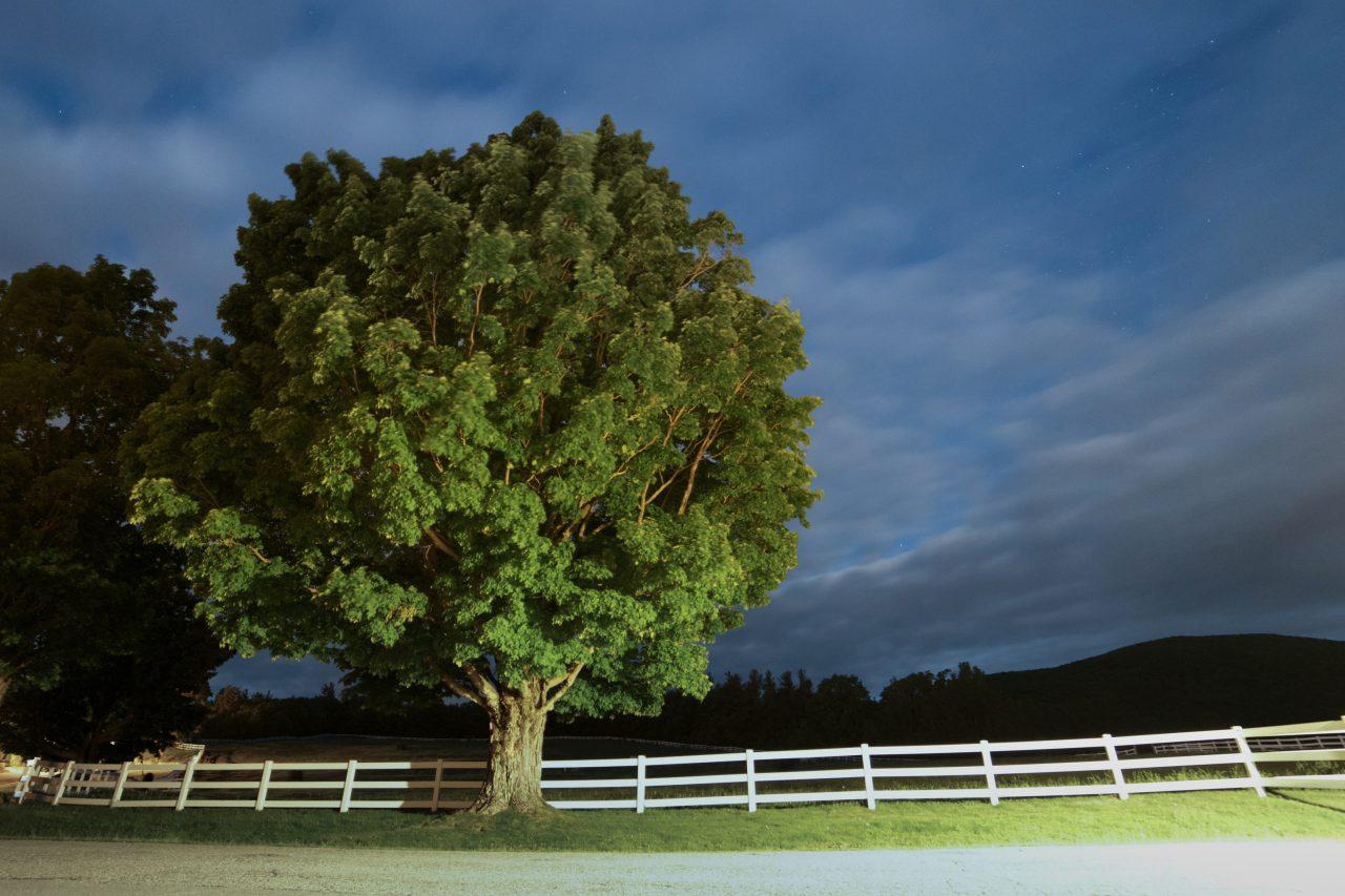 A True Tree Hugger